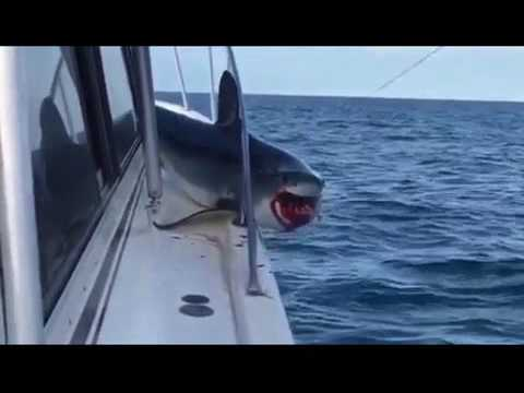 Terrifying moment a Shark jumps aboard boat off Long Island coast