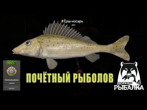 Почётный рыболов Вьюнка - трофейный ёрш-носарь