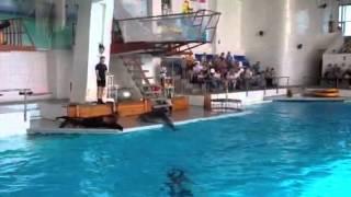 Две звезды в Набережночелнинском дельфинарии