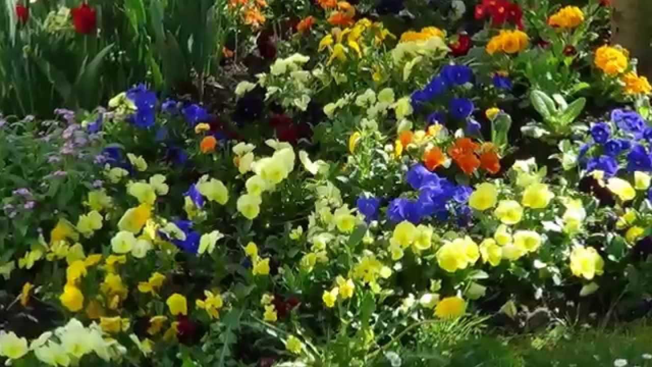 Paysages et Fleurs de Printemps 2014 - YouTube