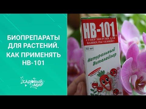 Активатор жизни растений HB-101. Как правильно применять этот биопрепарат.