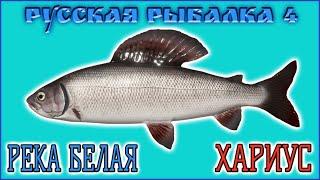 РР4 РЕКА БЕЛАЯ ХАРИУС РУССКАЯ РЫБАЛКА 4 БЕЛАЯ ХАРИУС RUSSIAN FISHING 4 BELAYA RIVER GRAYLING
