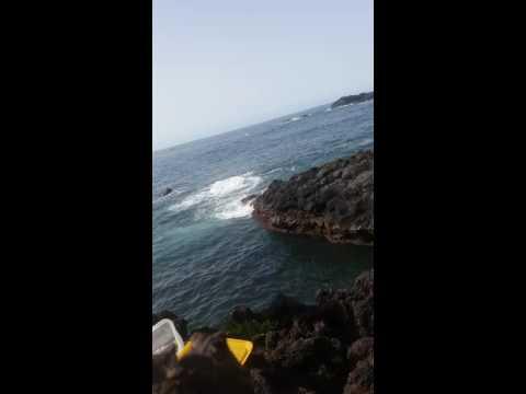 Pesca aos sargos nos Açores com Tiago Pescador