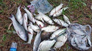 Bị cá giật rồi, kéo cá liên tục trong Vườn Quốc Gia Tràm Chim | Săn bắt SÓC TRĂNG |