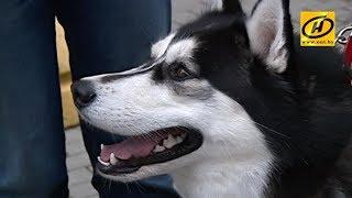 Кто разбрасывает колбасу с отравой для собак в центре Минска?