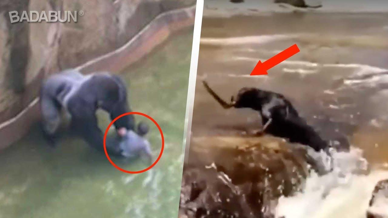 Los Animales Tienen Más Corazón Que Nosotros Youtube