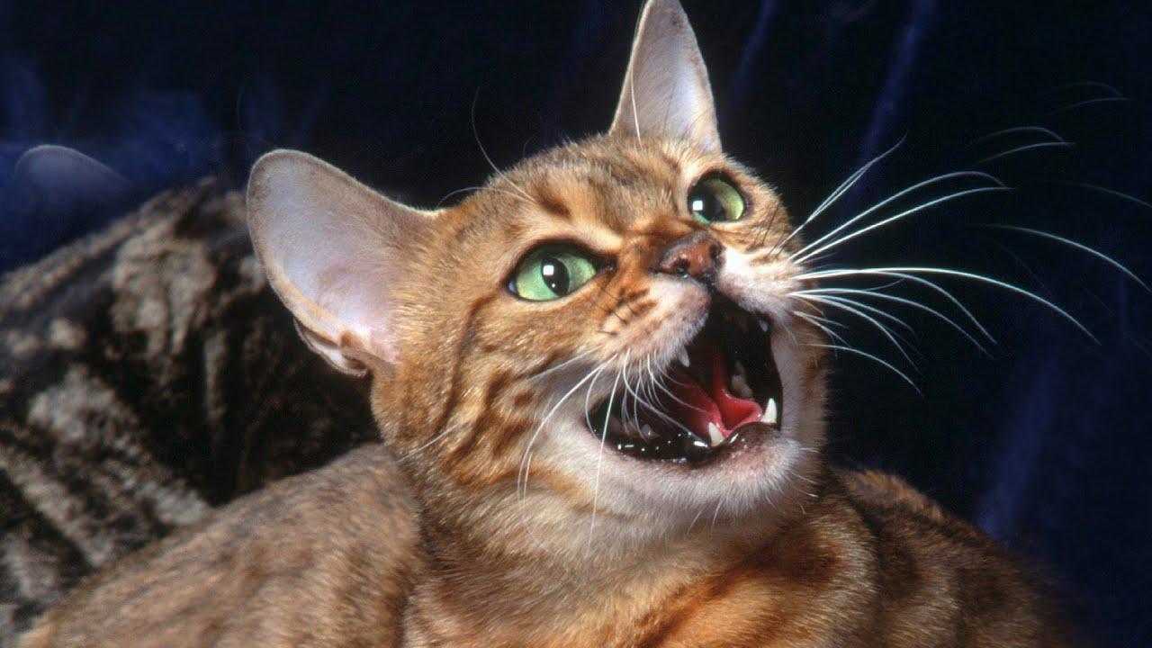 коты со звуком ютуб так понимаю