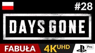 Days Gone PL  #28 (odc.28)  Ostatnie spotkanie z O'Brianem | Gameplay po polsku 4K