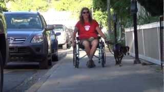 "Taos Plaza ""pit Bull"" Assistance Dog Public Access"