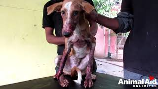 Brutally injured puppy DEFIES ALL ODDS--Watch his astounding transformation