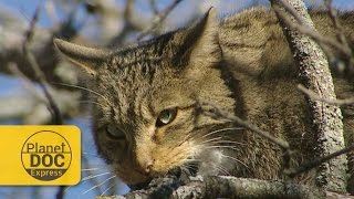 WildCat | Planet Doc Express Docs