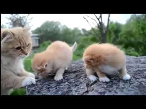игры майнкрафт милые котики