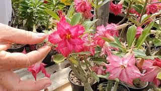 Tratamento Orgânico: Mais Flores, Mais Vigor