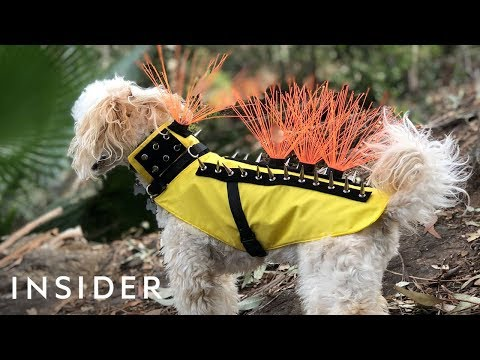 Mo' Bounce - New Body Suit for Your Dog Will Do a MAJOR Protectin'