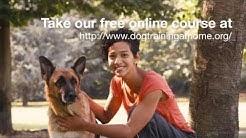 German Shepherd Dog Training Course Review