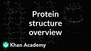Overview Of Protein Structure
