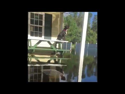شاهد : متطوع ينقذ الكلاب العالقة في مياه إعصار -فلورنس-  - نشر قبل 31 دقيقة