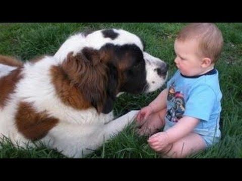 Perros Enormes Jugando Con Tiernos Bebes ¡Cuidado! [HD VIDEO]