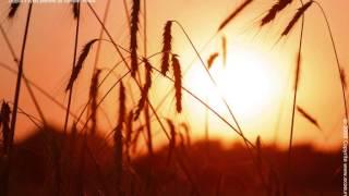 Kojący śpiew ptaków - odgłosy ptaków - Relax- Birdsong