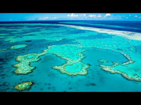 Great Barrier Reef's outlook lowered to 'very poor'