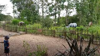 Robin Hill Country Park 2019/ African Adventure/ Isle Of Wight