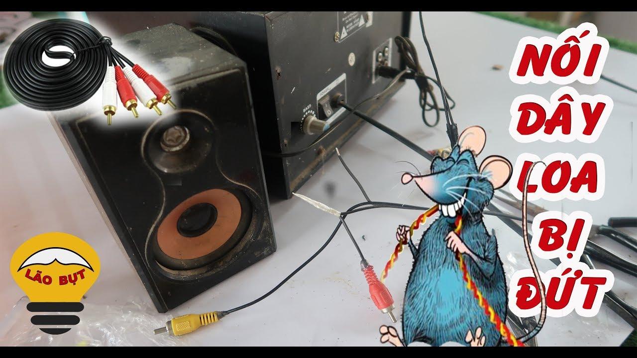 Nối dây loa bị đứt, chuột cắn nhanh và đơn giản – Lão Bụt