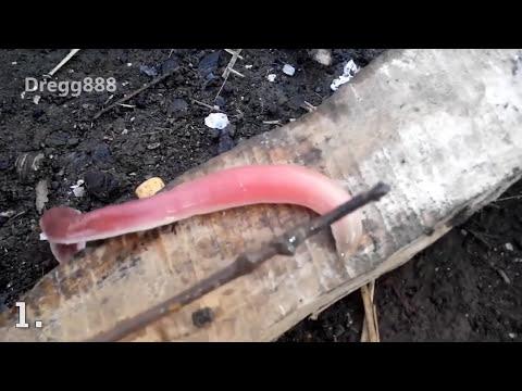 Top 5   Misterioznih STVORENJA Uhvacenih Na KAMERI!!