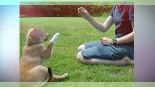 Dog Training In Cairns - To Build Mutual Respect Between Dog And Owner | 1300 306 887