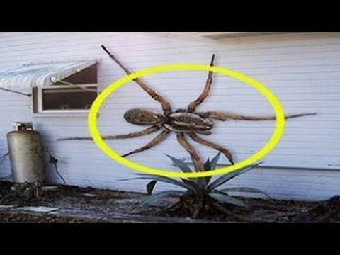 TOP lo mejor bromas, sustos y gritos con arañas