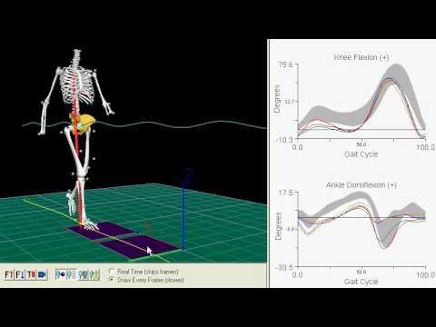 visual3D gait analysis.avi