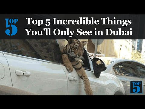top-5-incredible-things-you'll-only-see-in-dubai
