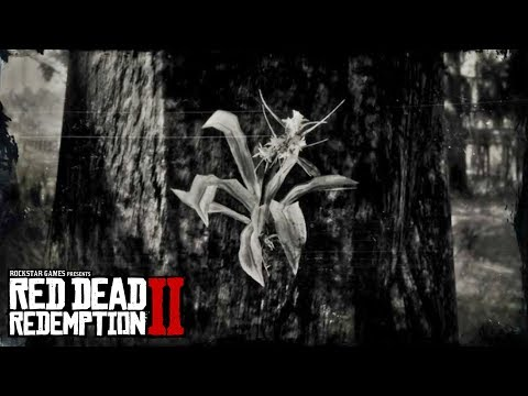 RED DEAD REDEMPTION 2 - Spider Orchid Location