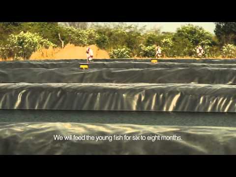 Community Fish Farm, Kaindu, Democratic Republic of the Congo, a MUMI social project