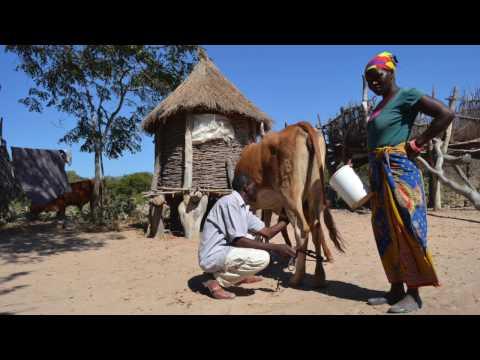CURE U Zambia Trip 2016