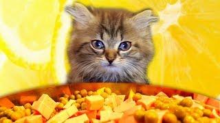 Как котенок помогал Алис салат делать. Маленький котенок впервые попробует колбаску и сходит с ума!