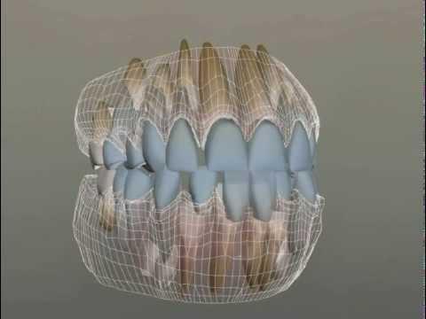 Прорезывание зубов у детей: симптомы, сроки, как облегчить