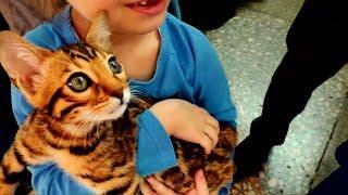 ВЫСТАВКА КОШЕК / КОТЯТА, КОШКИ, КОТЫ, МИЛОТА / Породы кошек