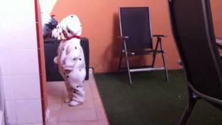Dalmatian Attack