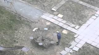 Собака на карусели