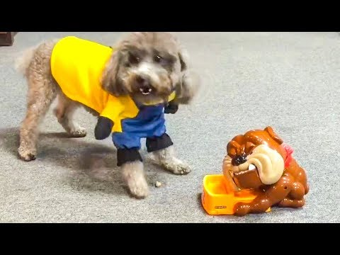 Dog Reaction to Playing Toy - Funny Dog Toy Reaction Compilation