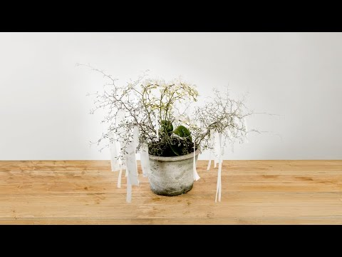 Nice Wishes Orchid | Flower Factor How To | Plant Creation