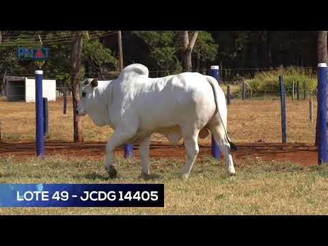 LOTE 49 - JCDG 14405 - NELORE