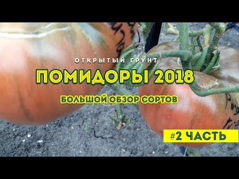 Обзор сортов помидор 2018 ! На открытом грунте 2 часть | помидоры_2018 | томатов_2018 | урожайных | открытый | томатов | сортов | лучшие | десять | томат | сорта