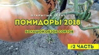 Обзор сортов помидор 2018 ! На открытом грунте 2 часть