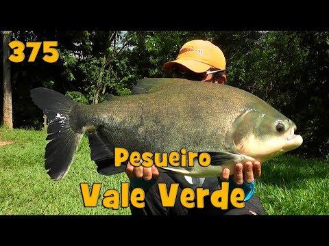 Superfície Radical com os peixes no Pesqueiro Vale Verde - Fishingtur na TV 375