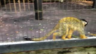 夢見ヶ崎動物公園の亀、インドクジャク、アメリカアカリス、フサオマキ...