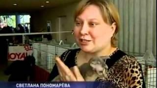 Украинский левкой.mp4