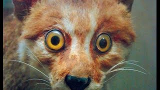 Funny Animals Startled Over Nothing Compilation! thumbnail