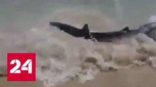Пляж Мальорки напугала акула