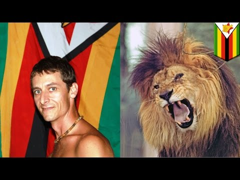 Lion kills man: safari tour guide mauled by lion at park where Cecil the lion lived - TomoNews